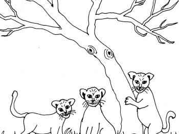 Bild 26 mit Text - Löwenbabys