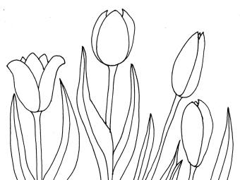 Bild 30 mit Text - Tulpen