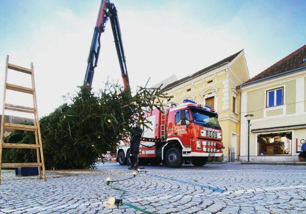 Aufstellen des Pöllauer-Christbaumes