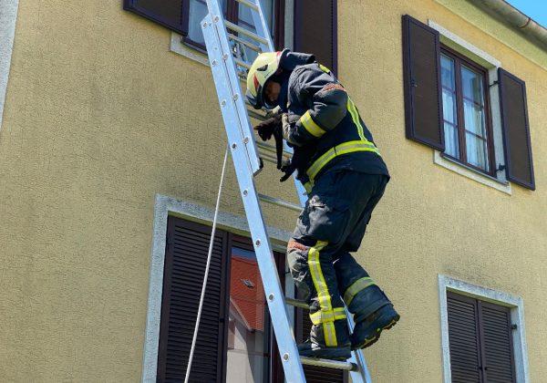 Babykatze von Dach gerettet